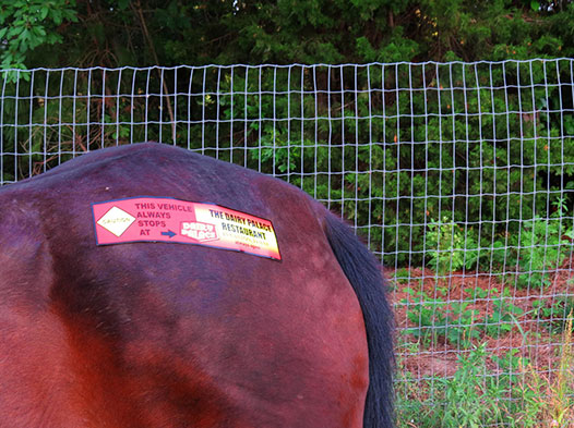 Photo of the rump of a horse with a DP bumper sticker stuck to it