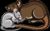plaga de roedores: ratas y ratones