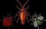 plagas de insectos: chinches, cucarachas, pulgas