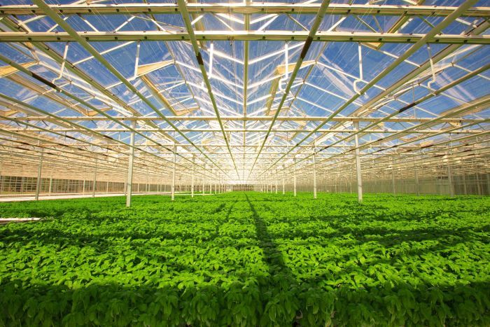 Facility Image of Sydney-Based Green Camel: Leader in Computerized Hydroponic Food Production