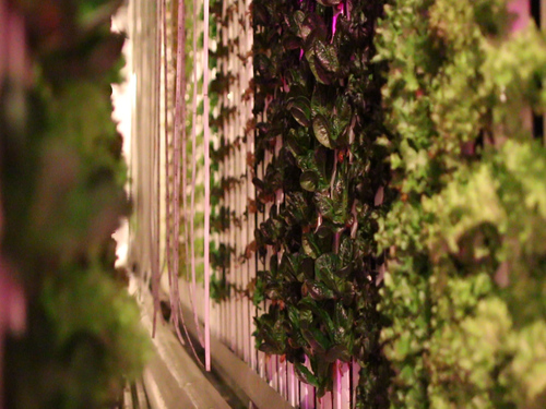 freight farms grow up to 4500 individual plants and can be monitored via the cloud