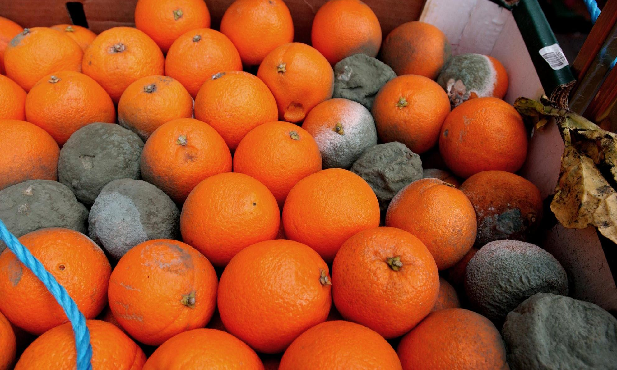produce wasting: oranges