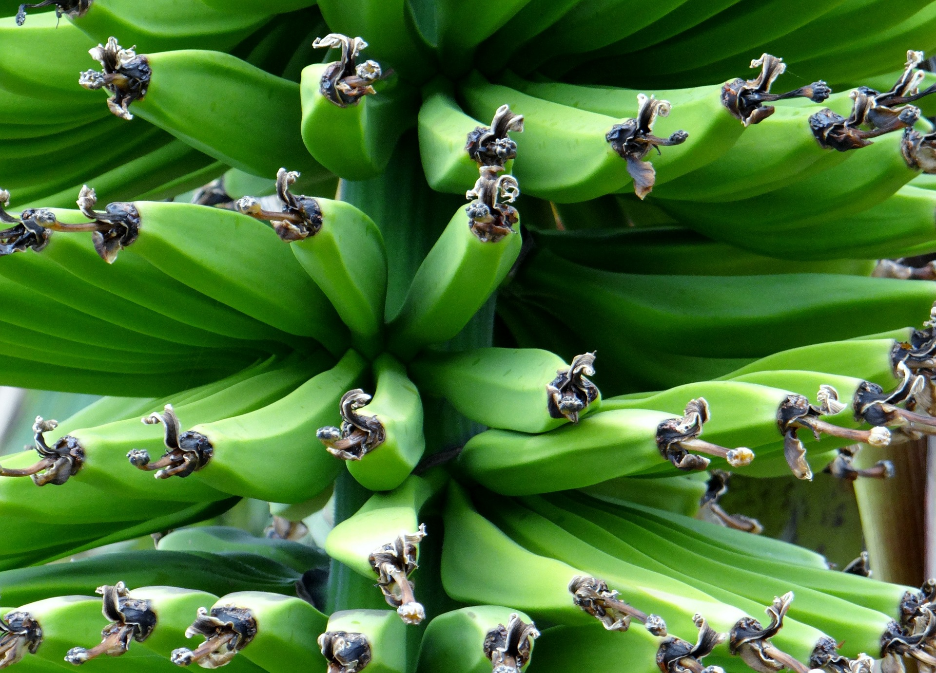fresh produce: bananas
