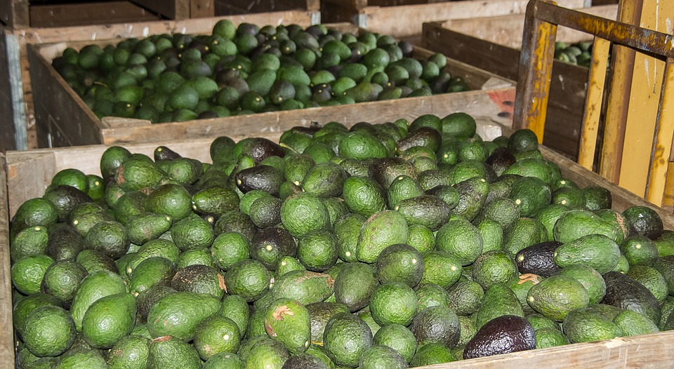 the prices for Avocados will standardize in the coming year and beyond