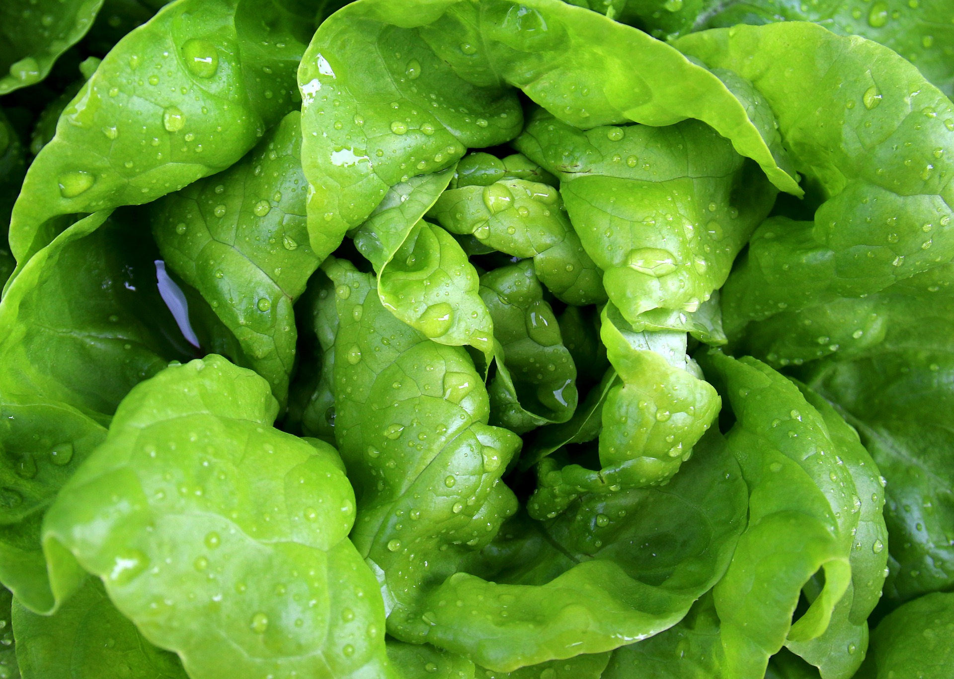 How lettuce freshness is being measured with cutting edge imaging technology