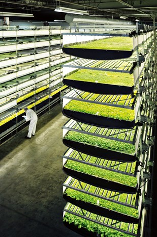 Aerofarms has built the worlds largest vertical farm.