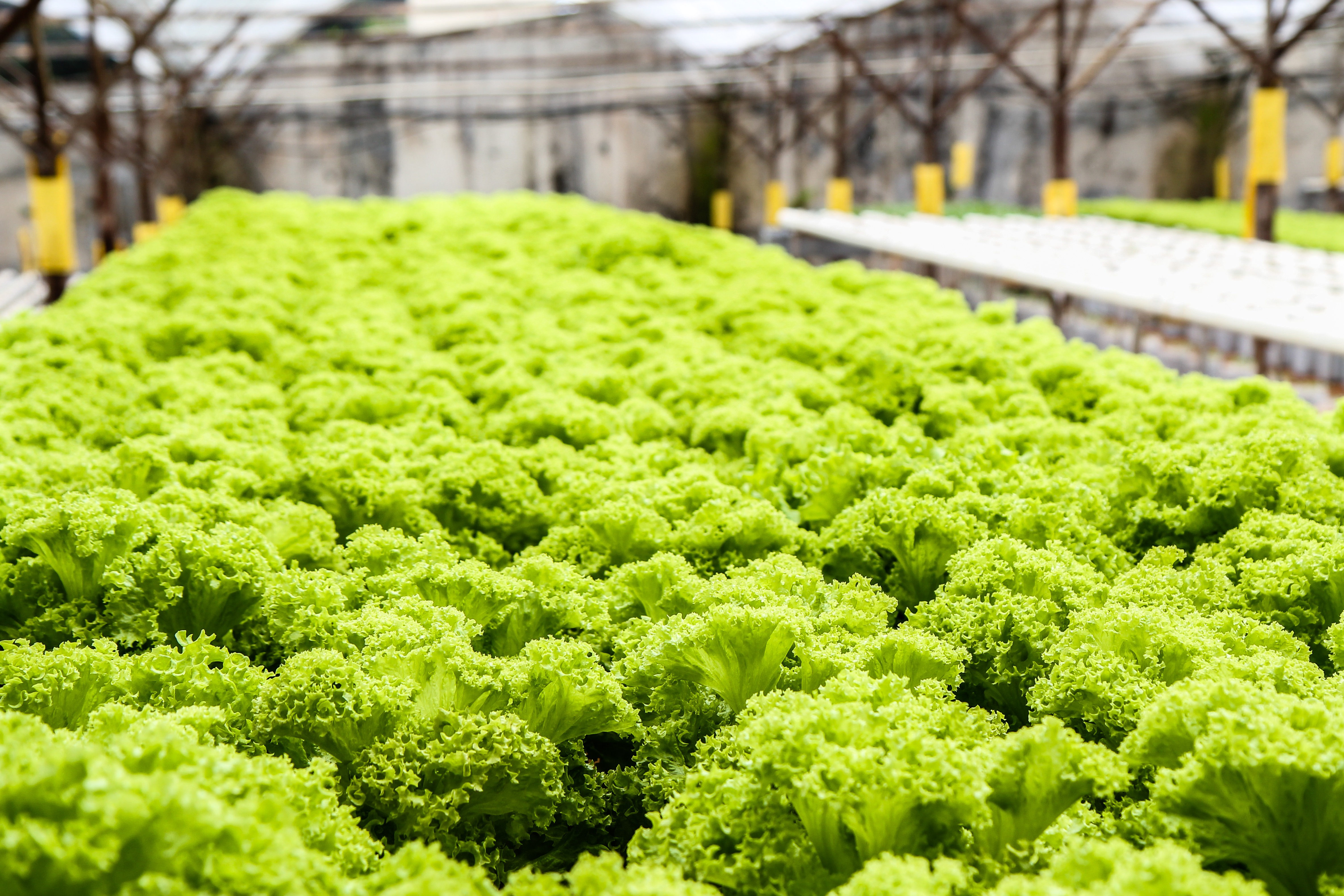How one company is enhancing the Canadian fresh produce supply chain