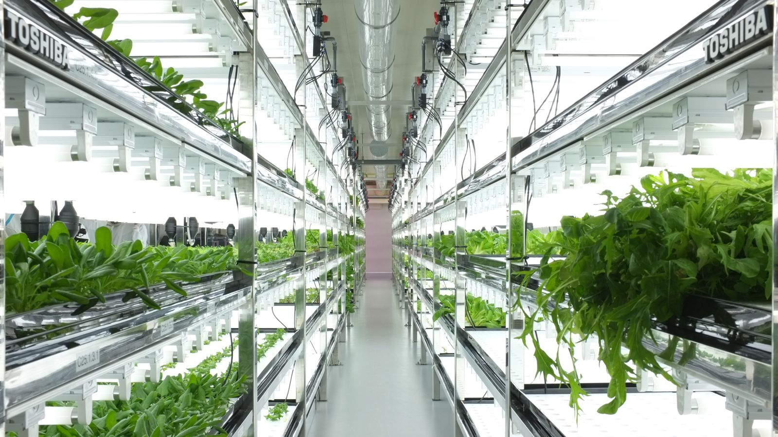 1 growtruck, also known as a farmers market in a box, can grow over 5,000 heads of leafy greens