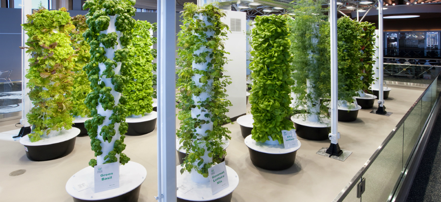 O'hare has the world's first airport aeroponic farm located in Terminal 3