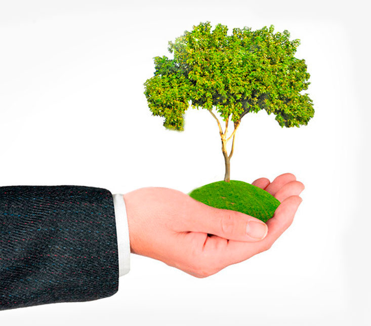 Photo of a three in a hand representing the Clean Fuels' vision