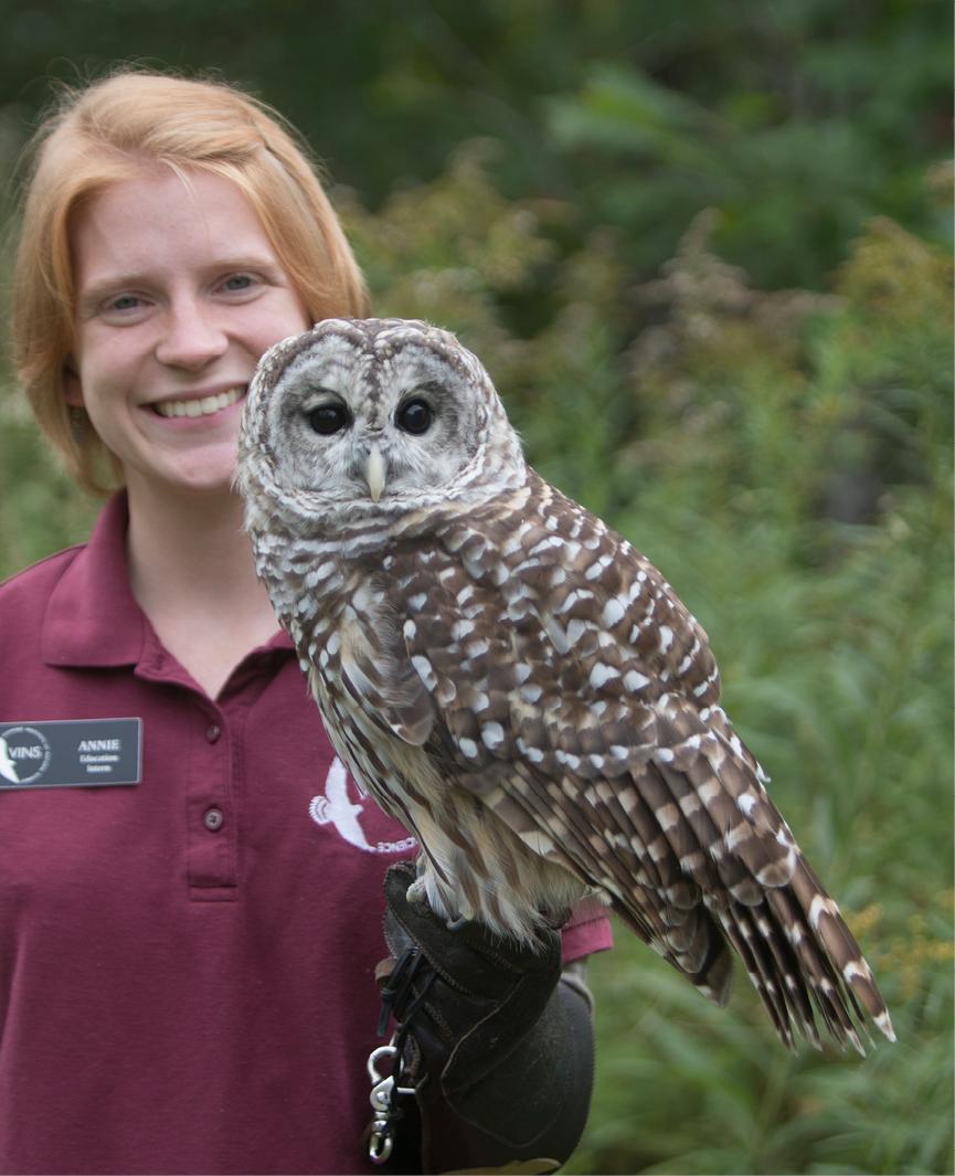 Barred Owl Troy 2