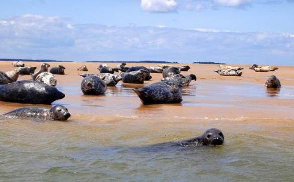 Blakeney Point Seal Trips