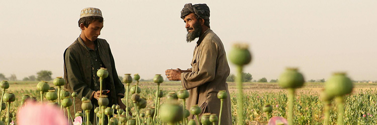 Effects of poverty on terrorism, opium drug war and talibans