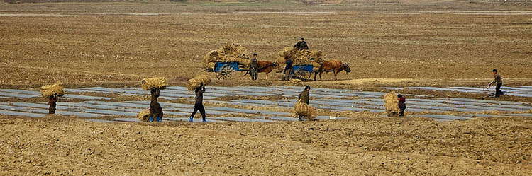 agriculture famine in north korea