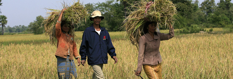 rural poverty in cambodia farmers