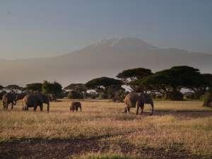 trip217_11_kenia_amboseli_elefanten