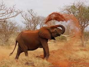 trip217_8_kenia_elefant
