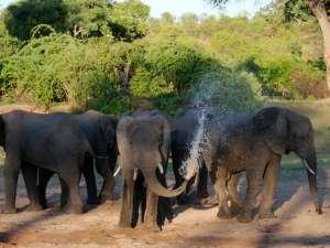 trip201_6_tansania_ruaha_elefanten