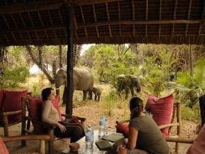 trip201_4_tansania_selous game reserve