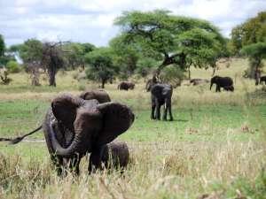 trip200_8_tansania_tarangire_elefanten