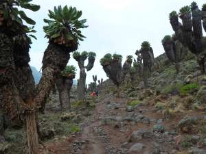 trip200_3_tansania_kilimandscharo