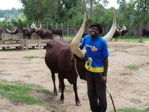 trip194_5_ruanda_cattle_ whisperer