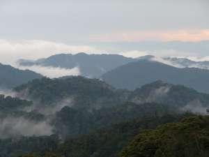 trip194_3_ruanda_nyungwe_forest