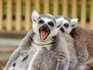 trip190_10_madagaskar_lemure