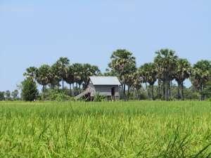 trip180_10_cambodia_landschaft