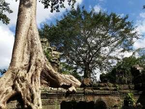 trip180_3_cambodia_ta_ prohm