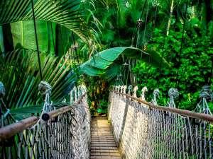 trip8_Brasilien_Dschungel