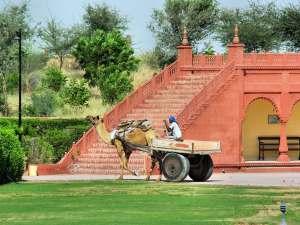 trip89_Indien_Kamel_Kutsche