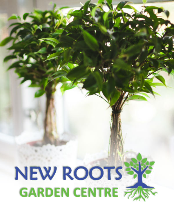New roots garden centre - Does olive garden deliver to your house ...