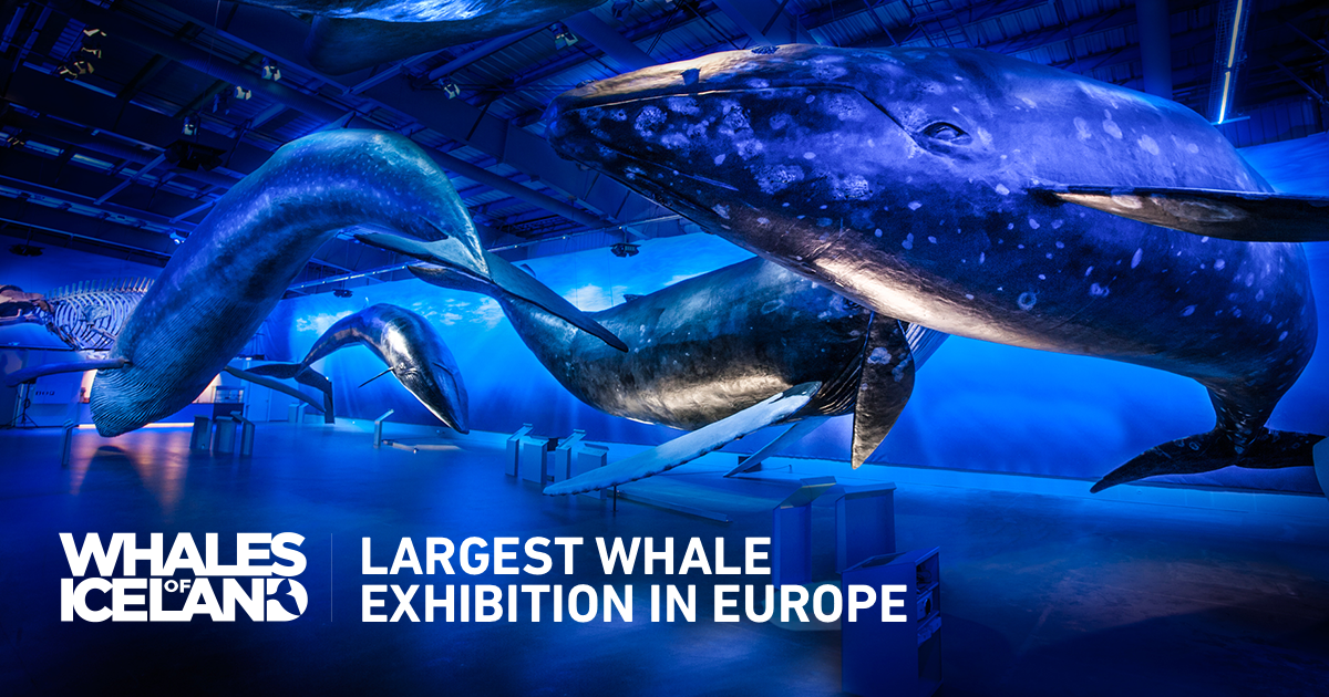 Whales of Iceland The Largest Whale Exhibition in Europe Life