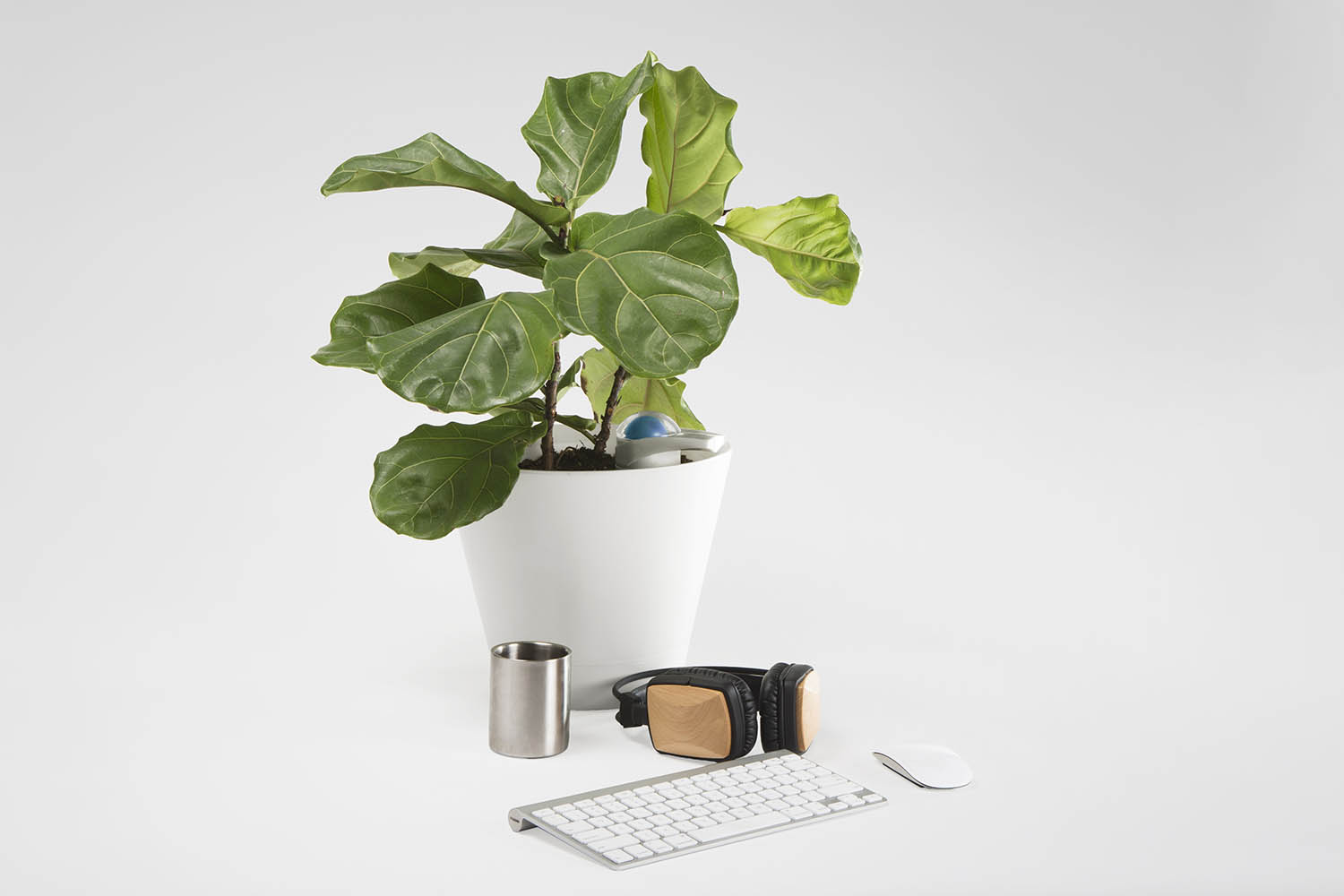 Intelligent watering device for office design with fiddle leaf fig