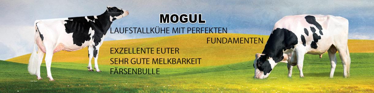 Mogul, Laufstallkühe mit perfekten Fundamenten, Färsenbulle