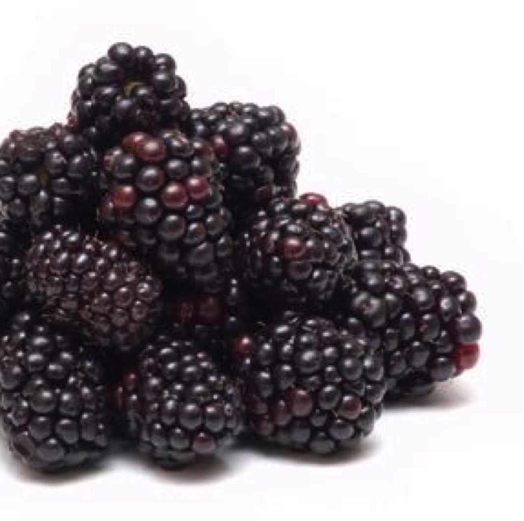 Andean Blackberry