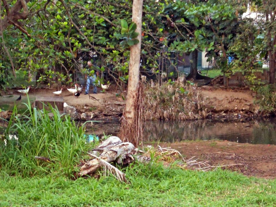 Laguna San José, Carolina, Puerto Rico.