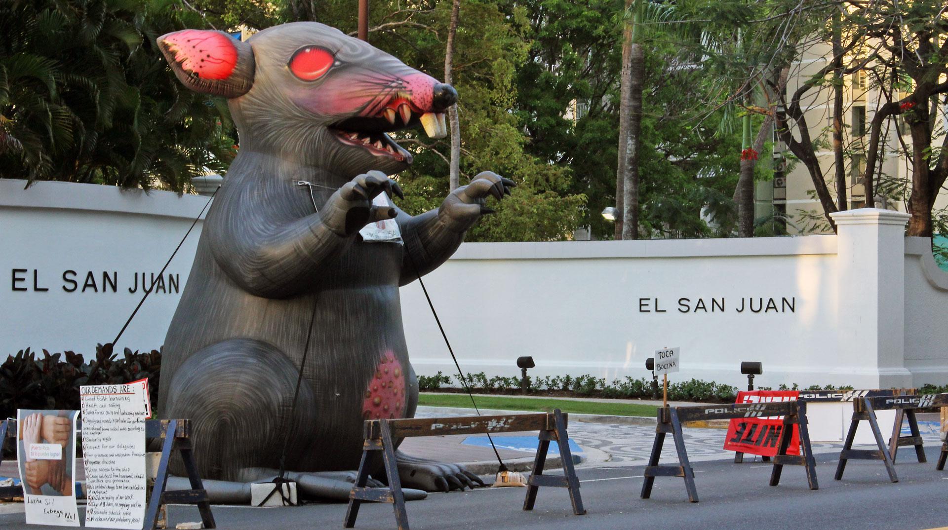 La rata gigante de Isla Verde, Carolina, Puerto Rico.