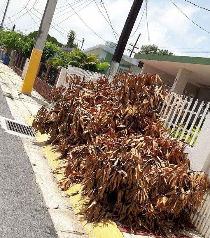 Basura o escombros sin recoger en Carolina, Puerto Rico.