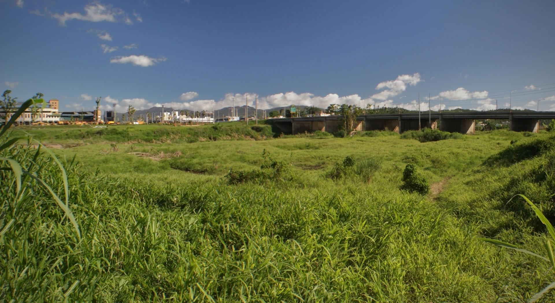 Vista del Puente Julia De Burgos (en Carolina, Puerto Rico) desde un matorral cerca de Villa Caridad.
