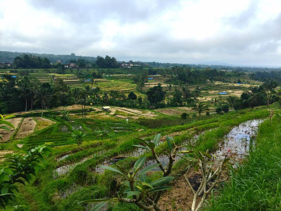 under30experiences-trips-bali-rice-terraces