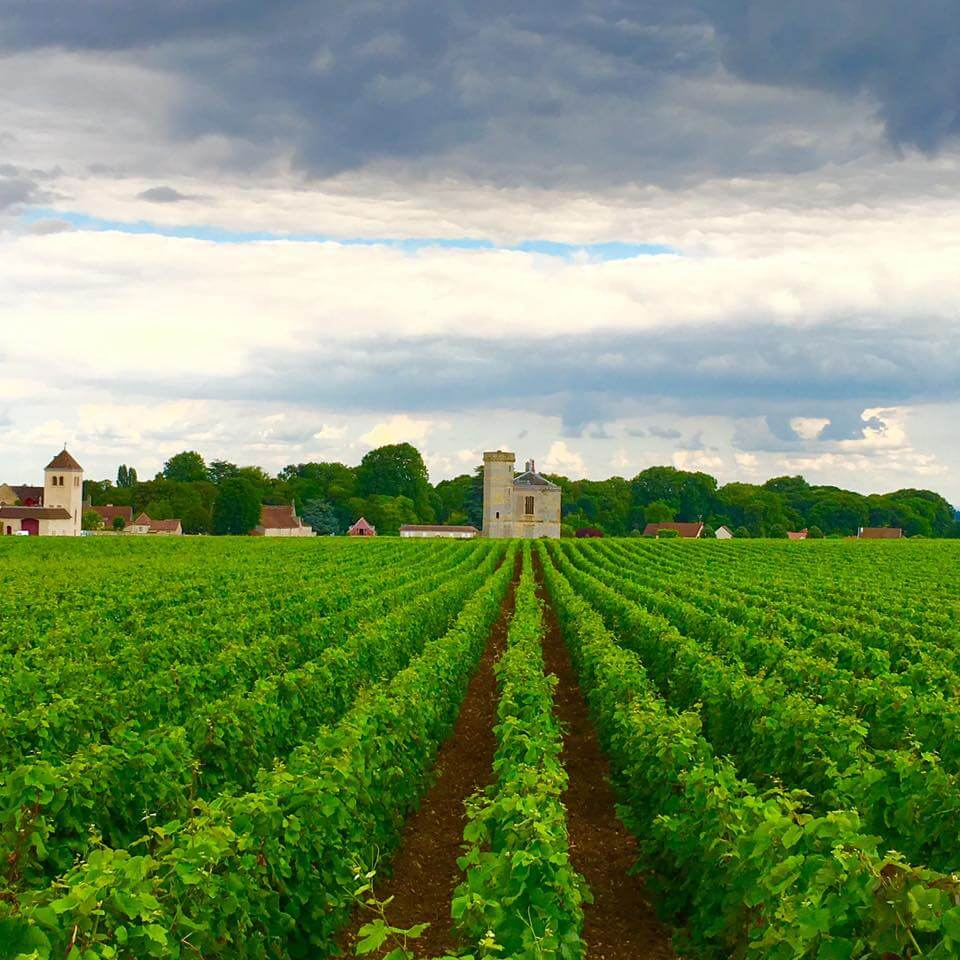 blog-explore-france-vineyards
