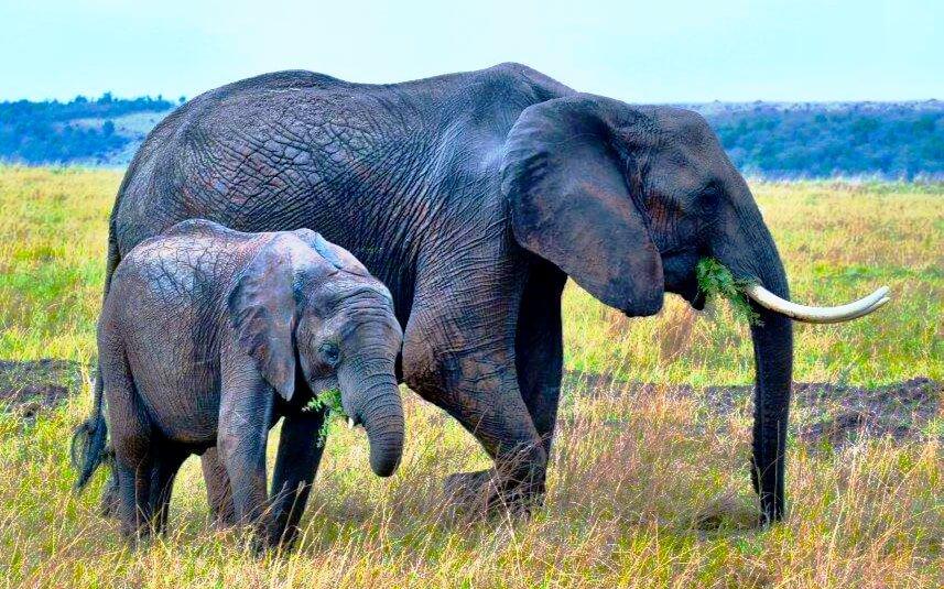 Elephant-Conservation-Is-Important-Mara