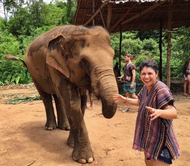 Elephant-Conservation-Is-Important-feeding