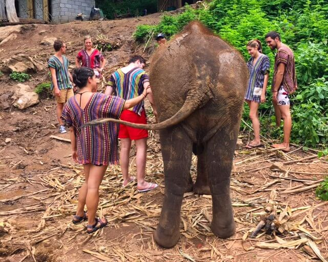 Elephant-Conservation-Is-Important-saying goodbye