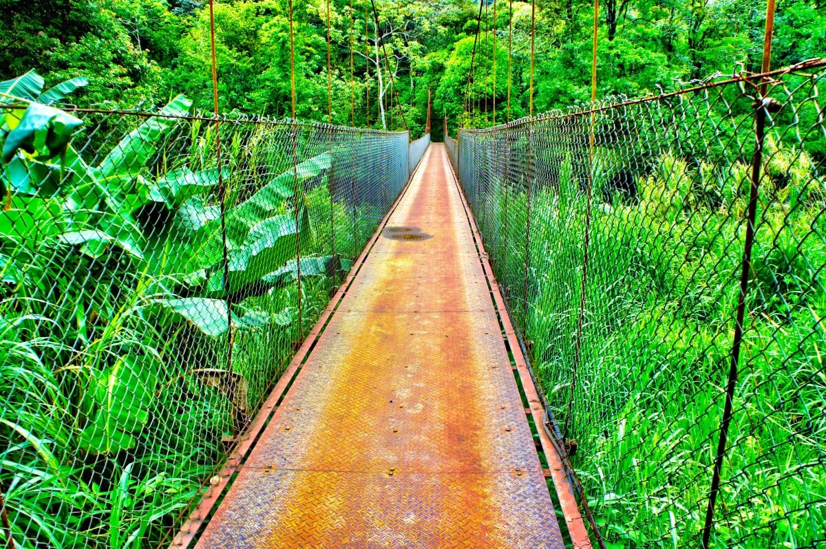 visit-costarica-in-rainy-season-green-jungle-bridge