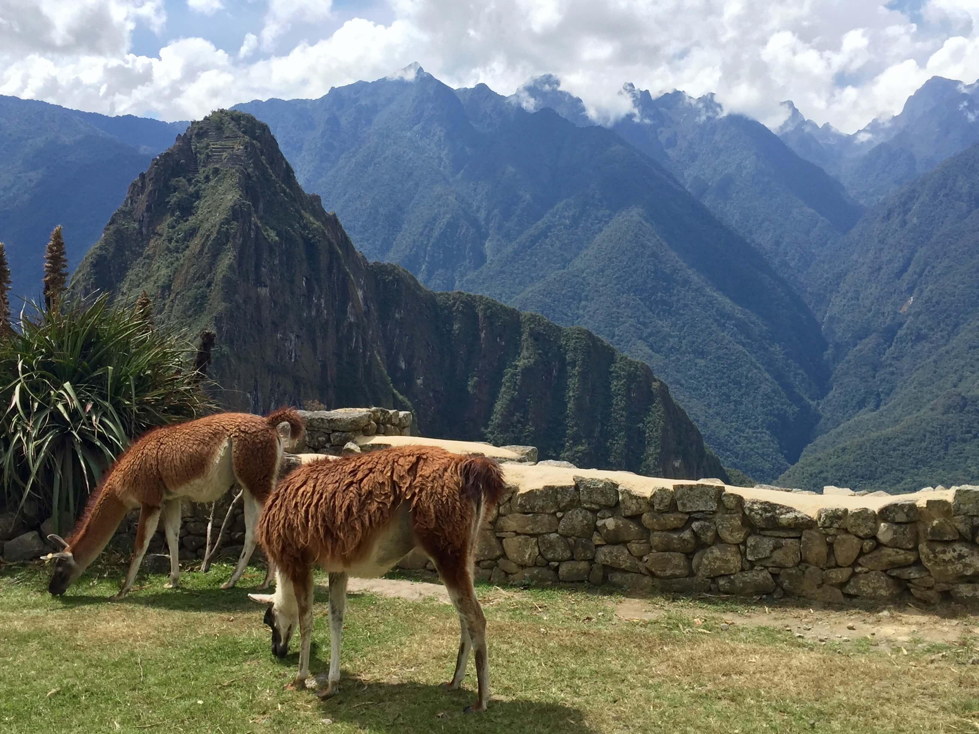 blog-10-facts-machu-picchu-llamas