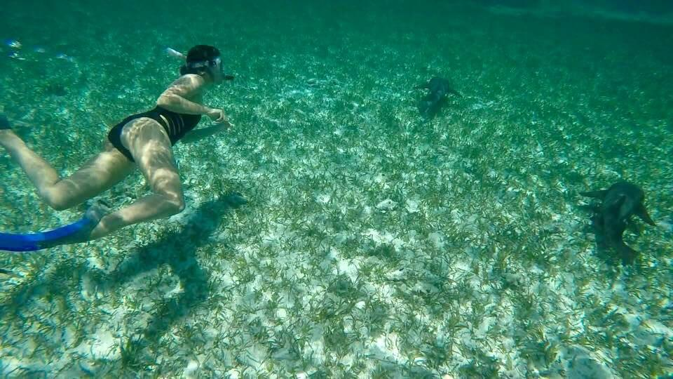 blog-you-better-belize-it-swimming-with-sharks