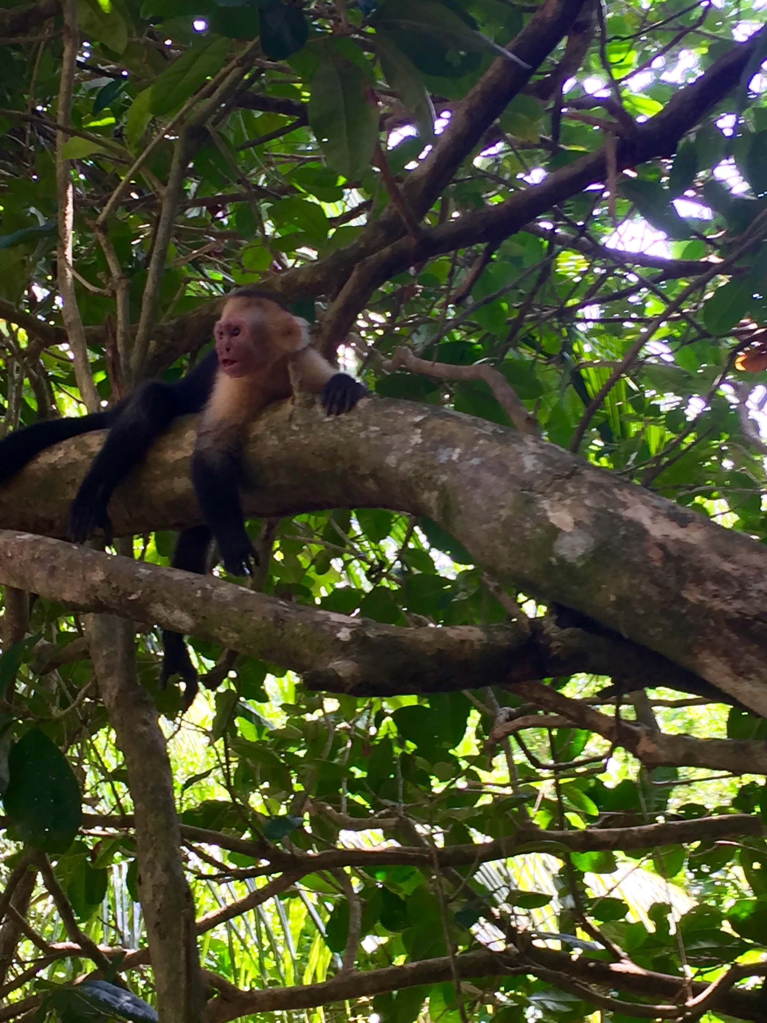 blog-costa-rica-9-days-capuchin-monkey